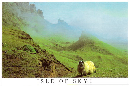 skye-sheep.jpg